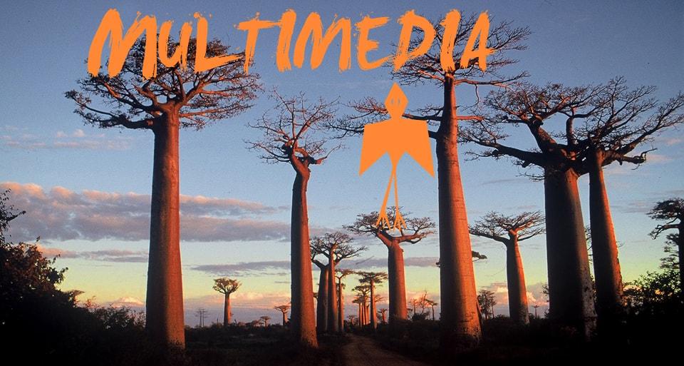 Videos de África