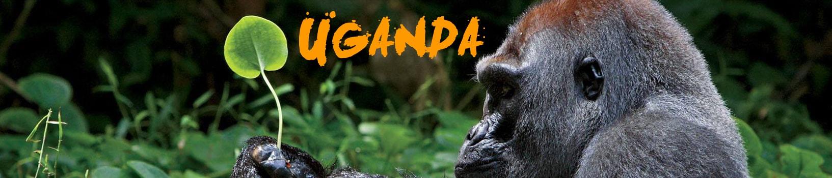 viaje-uganda